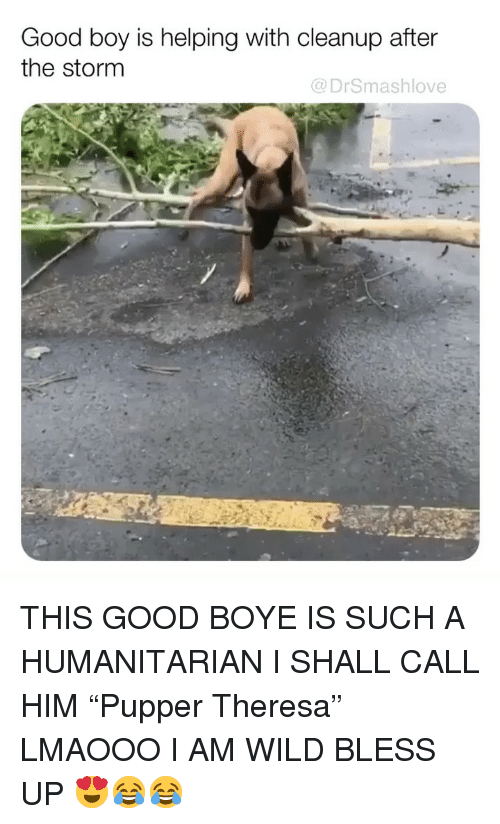 """Theresa: Good boy is helping with cleanup after  the stornm  @DrSmashlove THIS GOOD BOYE IS SUCH A HUMANITARIAN I SHALL CALL HIM """"Pupper Theresa"""" LMAOOO I AM WILD BLESS UP 😍😂😂"""