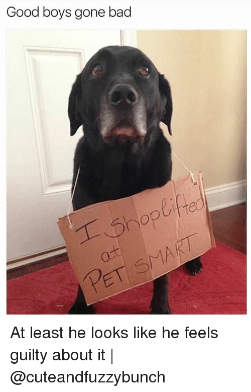 Bad, Memes, and Good: Good boys gone bad  ifre At least he looks like he feels guilty about it   @cuteandfuzzybunch