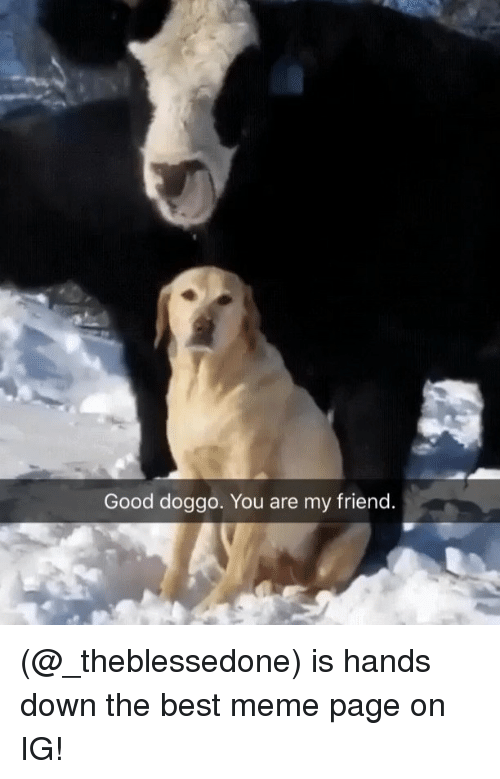 best meme: Good doggo. You are my friend (@_theblessedone) is hands down the best meme page on IG!
