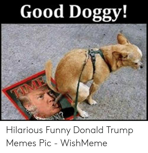 Wishmeme: Good Doggy! Hilarious Funny Donald Trump Memes Pic - WishMeme