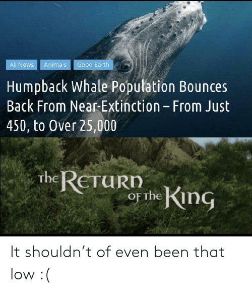 The King: Good Earth  All News  Animals  Humpback Whale Population Bounces  Back From Near-Extinction - From Just  450, to Over 25,000  the RETURD  or the King It shouldn't of even been that low :(