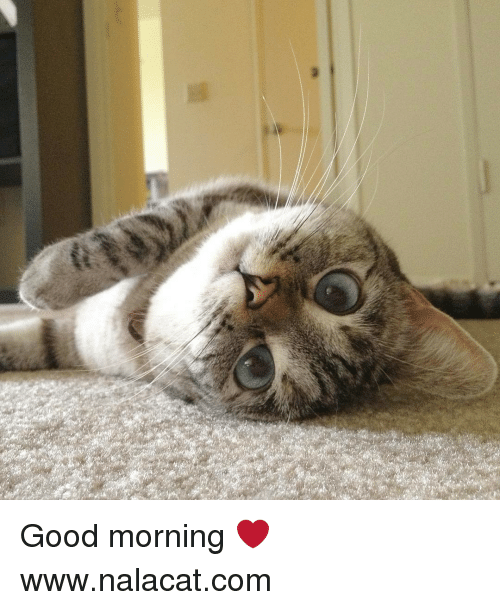 good mornings: Good morning ❤ www.nalacat.com