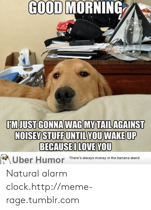 Noisey: GOOD MORNING  Bu  IM JUST GONNA WAG MY TAIL AGAINST  NOISEY STUFF UNTIL YOU WAKE UP  BECAUSEILOVE YOU  Über Humor There's always money in the banana stand Natural alarm clock.http://meme-rage.tumblr.com