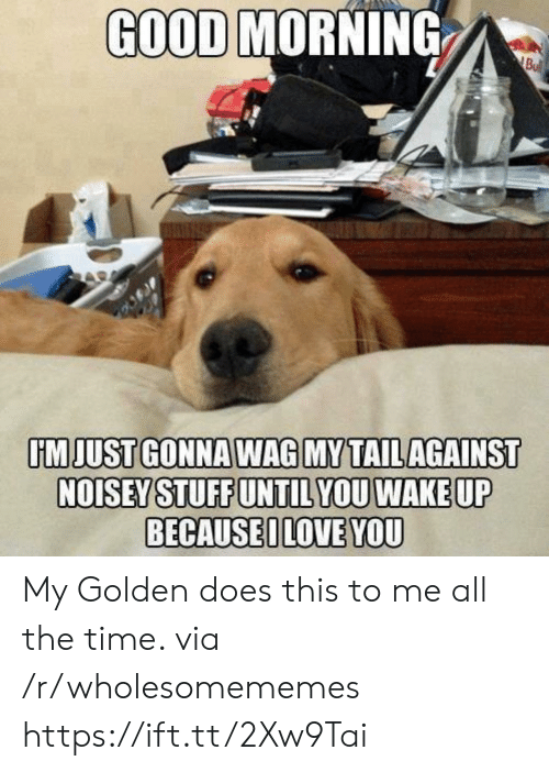 Noisey: GOOD MORNING  Bu  IMJUST GONNA WAG MY TAILAGAINST  NOISEY STUFF UNTIL YOU WAKE UP  BECAUSEILOVE YOU My Golden does this to me all the time. via /r/wholesomememes https://ift.tt/2Xw9Tai