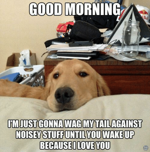 Noisey: GOOD MORNING  Bull  IM JUST GONNA WAG MY TAIL AGAINST  NOISEY STUFF UNTIL YOU WAKE UP  BECAUSEILOVE YOU