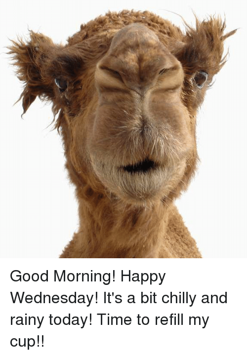 Memes, Good Morning, and Chillis: Good Morning! Happy Wednesday!It's a ...