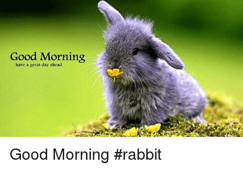 Good Morning Have A Great Day Ahead Good Morning Rabbit Meme On