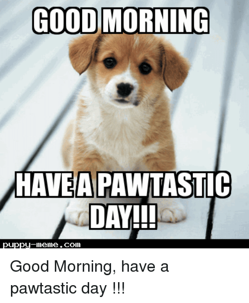 Good Morning Memes : Good morning havea pawtastic day puppy memecom