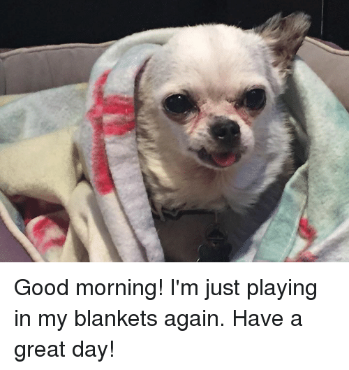 Good Morning I M Up Meme : Good morning i m just playing in my blankets again have a