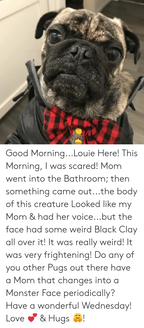 Have A Wonderful Wednesday: Good Morning...Louie Here! This Morning, I was scared! Mom went into the Bathroom; then something came out...the body of this creature Looked like my Mom & had her voice...but the face had some weird Black Clay all over it! It was really weird! It was very frightening! Do any of you other Pugs out there have a Mom that changes into a Monster Face periodically?  Have a wonderful Wednesday!  Love 💕 & Hugs 🤗!
