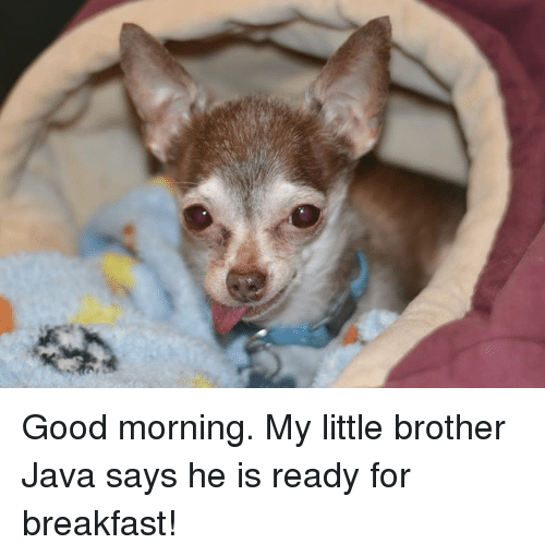 good mornings: Good morning.  My little brother Java says he is ready for breakfast!
