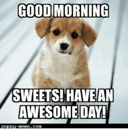 Good Morning Meme Dog : Funny puppy memes of on sizzle buy