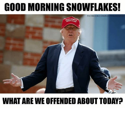 Image result for good morning snowflakes what are we offended about today