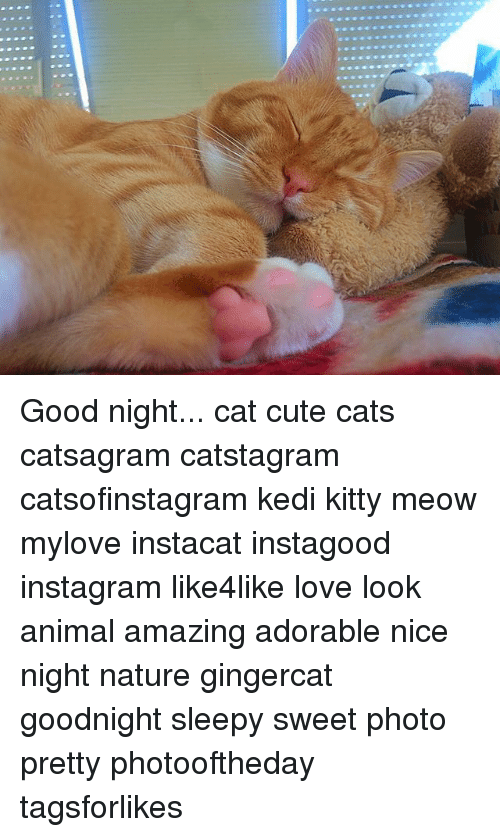 Cats, Cute, and Instagram: Good night... cat cute cats catsagram catstagram catsofinstagram kedi kitty meow mylove instacat instagood instagram like4like love look animal amazing adorable nice night nature gingercat goodnight sleepy sweet photo pretty photooftheday tagsforlikes
