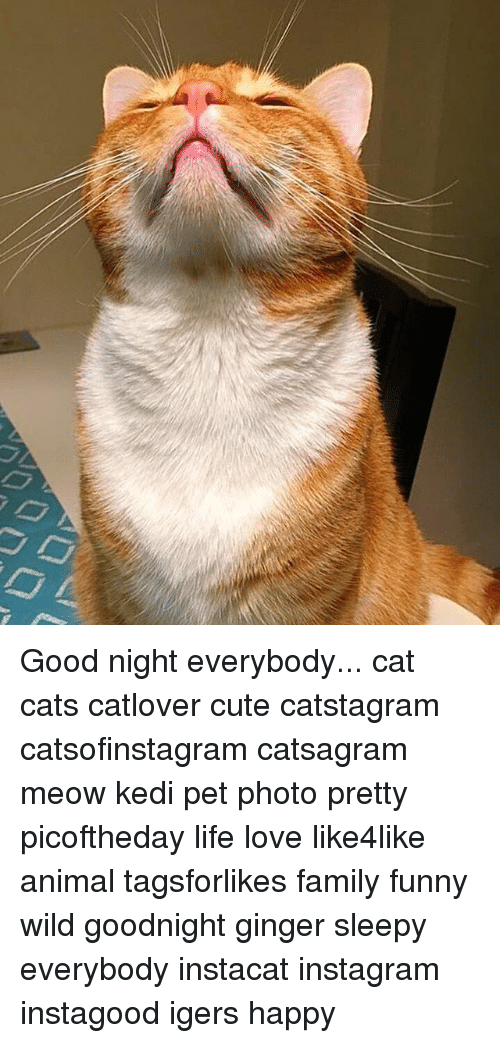 Cats, Cute, and Family: Good night everybody... cat cats catlover cute catstagram catsofinstagram catsagram meow kedi pet photo pretty picoftheday life love like4like animal tagsforlikes family funny wild goodnight ginger sleepy everybody instacat instagram instagood igers happy