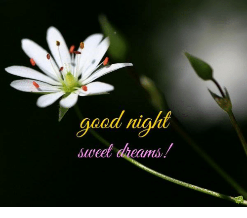 good night sweet dreams: good night  sweet  dreams