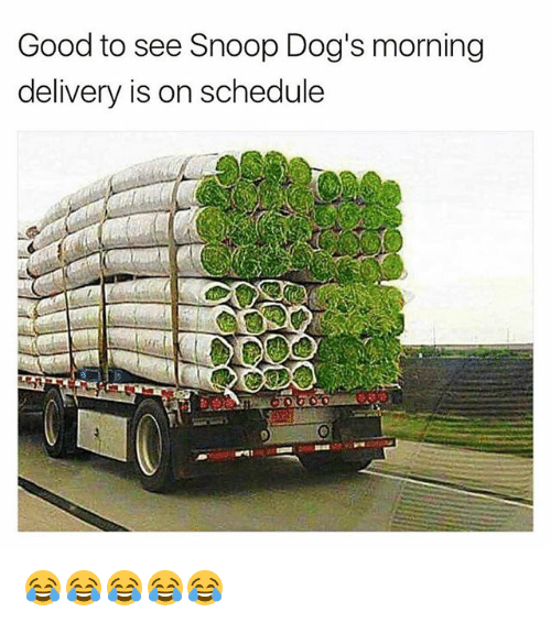 snoopes: Good to see Snoop Dog's morning  delivery is on schedule 😂😂😂😂😂