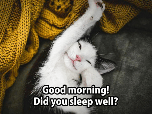 Good Morning Did You Sleep Well In French : Best memes about did you sleep well