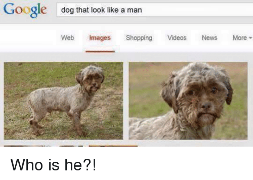 Dank, Dogs, and Google: Google  dog that look like a man  Web Images  Shopping  Videos  News  More Who is he?!