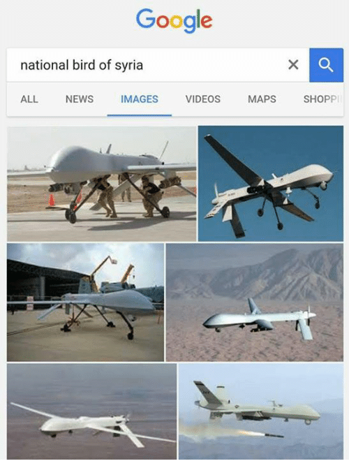 video mapping: Google  national bird of syria  ALL  NEWS  IMAGES  VIDEOS  MAPS  SHOPP