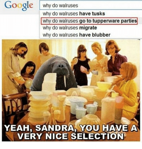 Tusk: Google  why do walruses  why do walruses have tusks  why do walruses go to tupperware parties  why do walruses migrate  why do walruses have blubber  YEAH, SANDRA YOU HAVE A  VERY NICE SELECTION