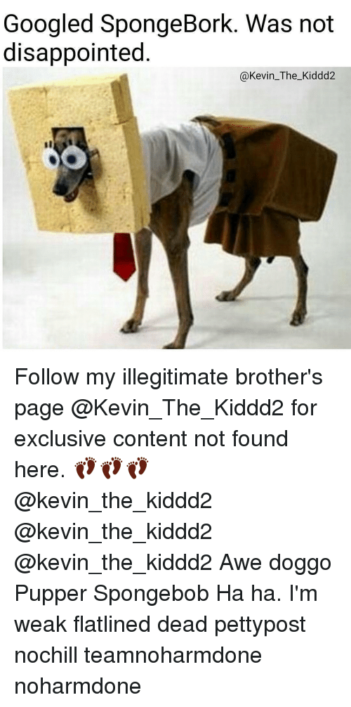 awe: Googled SpongeBork. Was not  disappointed  Kevin The Kiddd2 Follow my illegitimate brother's page @Kevin_The_Kiddd2 for exclusive content not found here. 👣👣👣 @kevin_the_kiddd2 @kevin_the_kiddd2 @kevin_the_kiddd2 Awe doggo Pupper Spongebob Ha ha. I'm weak flatlined dead pettypost nochill teamnoharmdone noharmdone