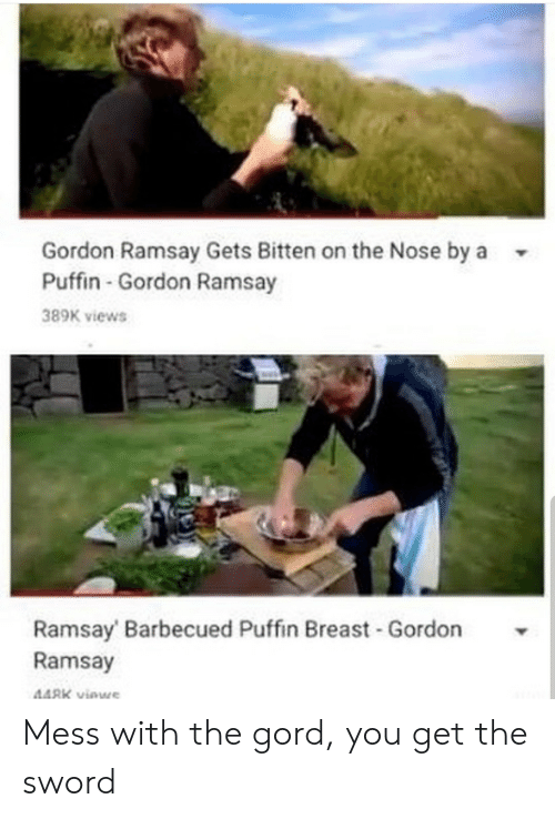 Mess With: Gordon Ramsay Gets Bitten on the Nose by a  Puffin-Gordon Ramsay  389K views  Ramsay Barbecued Puffin Breast -Gordon  Ramsay  448K viewe Mess with the gord, you get the sword