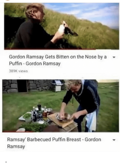 bitten: Gordon Ramsay Gets Bitten on the Nose by a  Puffin-Gordon Ramsay  389K views  Ramsay Barbecued Puffin Breast Gordon  Ramsay .