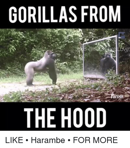 25 best memes about the hood and harambe the hood and harambe