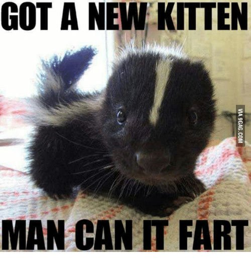 Can Cats Fart