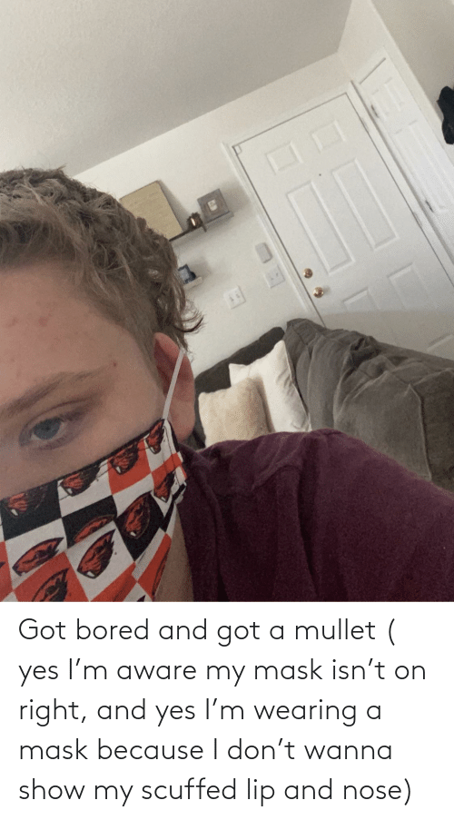 lip: Got bored and got a mullet ( yes I'm aware my mask isn't on right, and yes I'm wearing a mask because I don't wanna show my scuffed lip and nose)