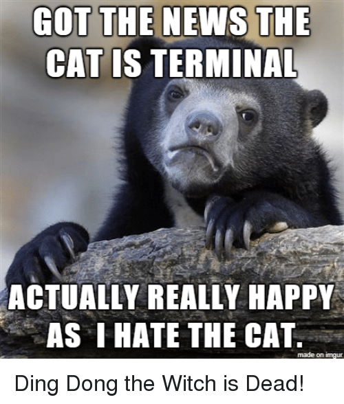 Happy, Imgur, and Got: GOT THE NENS THE  CAT IS TERMINAL  ACTUALLY REALLY HAPPY  AS IHATE THE CAT  made on imgur
