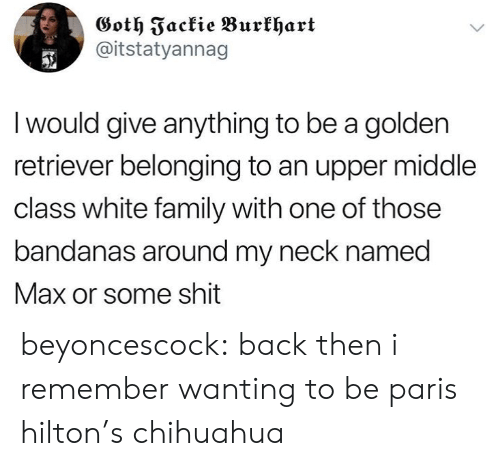 chihuahua: Goth Fackie Burkhart  @itstatyannag  I would give anything to be a golden  retriever belonging to an upper middle  class white family with one of those  bandanas around my neck named  Max or some shit beyoncescock: back then i remember wanting to be paris hilton's chihuahua