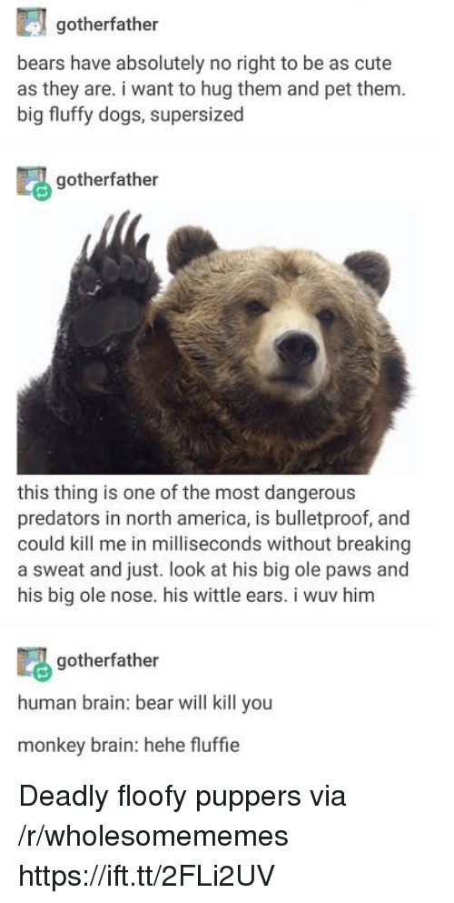 north america: gotherfather  bears have absolutely no right to be as cute  as they are. i want to hug them and pet them  big fluffy dogs, supersized  gotherfather  this thing is one of the most dangerous  predators in north america, is bulletproof, and  could kill me in milliseconds without breaking  a sweat and just. look at his big ole paws and  his big ole nose. his wittle ears. i wuv him  gotherfather  human brain: bear will kill you  monkey brain: hehe fluffie Deadly floofy puppers via /r/wholesomememes https://ift.tt/2FLi2UV
