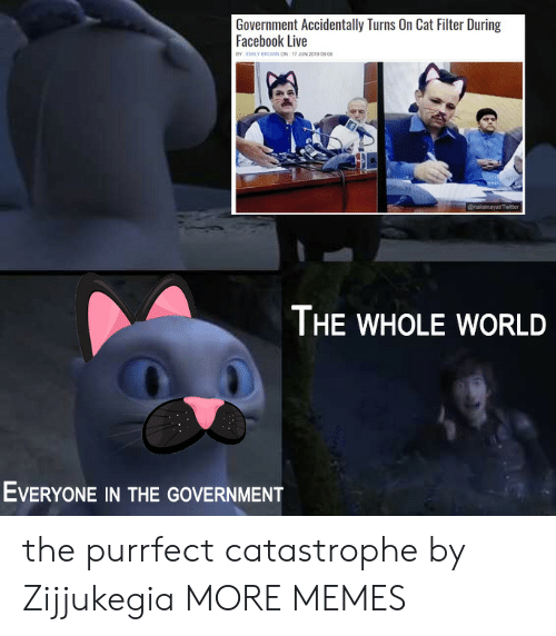 Facebook Live: Government Accidentally Turns On Cat Filter During  Facebook Live  BY EMILY BROWN ON 17 JUN 2019 0908  @nailainayatTwiter  THE WHOLE WORLD  EVERYONE IN THE GOVERNMENT the purrfect catastrophe by Zijjukegia MORE MEMES