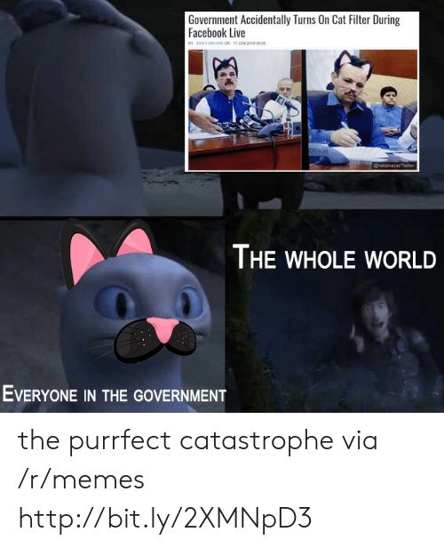 Facebook Live: Government Accidentally Turns On Cat Filter During  Facebook Live  BY EMILY BROWwN ON 17 JUN 2019 09 08  @nailainayat/Twitter  THE WHOLE WORLD  EVERYONE IN THE GOVERNMENT the purrfect catastrophe via /r/memes http://bit.ly/2XMNpD3