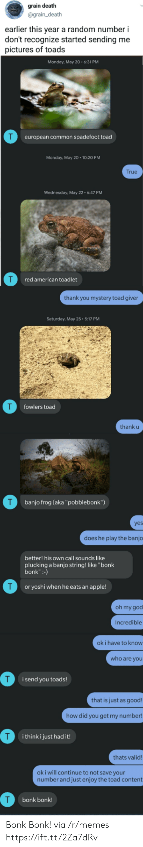 """toads: grain death  @grain_death  earlier this year a random number i  don't recognize started sending me  pictures of toads  Monday, May 20.6:31 PM  T  european common spadefoot toad  Monday, May 20 10:20 PM  True  Wednesday, May 22 6:47 PM  red american toadlet  thank you mystery toad giver  Saturday, May 25 5:17 PM  T  fowlers toad  thank u  T  banjo frog (aka""""pobblebonk"""")  yes  does he play the banjo  better! his own call sounds like  plucking a banjo string! like """"bonk  bonk"""":-)  T  or yoshi when he eats an apple!  oh my god  Incredible  ok i have to know  who are you  i send you toads!  that is just as good!  how did you get my number!  T  i think i just had it!  thats valid!  oki will continue to not save your  number and just enjoy the toad content  bonk bonk! Bonk Bonk! via /r/memes https://ift.tt/2Za7dRv"""