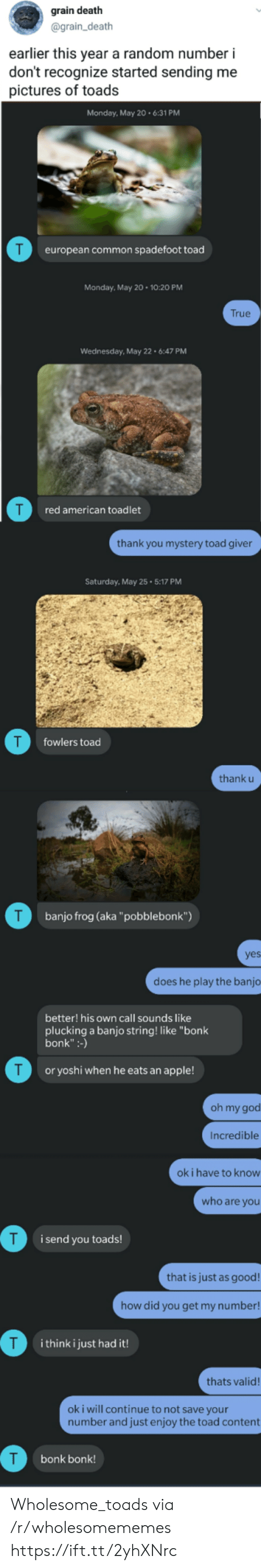 """toads: grain death  @grain_death  earlier this year a random number i  don't recognize started sending me  pictures of toads  Monday, May 20.6:31 PM  T  european common spadefoot toad  Monday, May 20 10:20 PM  True  Wednesday, May 22 6:47 PM  red american toadlet  thank you mystery toad giver  Saturday, May 25 5:17 PM  T  fowlers toad  thank u  T  banjo frog (aka""""pobblebonk"""")  yes  does he play the banjo  better! his own call sounds like  plucking a banjo string! like """"bonk  bonk"""":-)  T  or yoshi when he eats an apple!  oh my god  Incredible  ok i have to know  who are you  i send you toads!  that is just as good!  how did you get my number!  T  i think i just had it!  thats valid!  oki will continue to not save your  number and just enjoy the toad content  bonk bonk! Wholesome_toads via /r/wholesomememes https://ift.tt/2yhXNrc"""