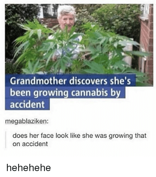 Memes, Cannabis, and Been: Grandmother discovers she's  been growing cannabis by  accident  does her face look like she was growing that  on accident hehehehe