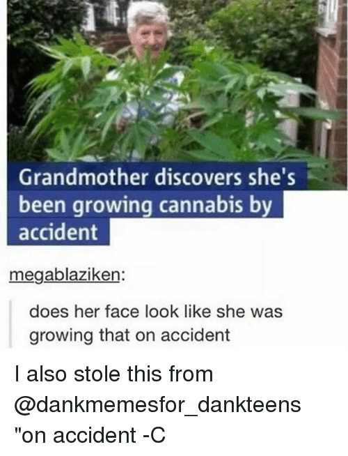 "Memes, Cannabis, and Been: Grandmother discovers she's  been growing cannabis by  accident  megablaziken:  does her face look like she was  growing that on accident I also stole this from @dankmemesfor_dankteens ""on accident -C"