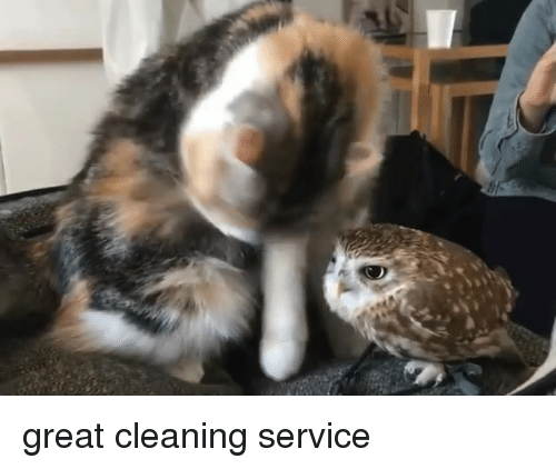 Service, Great, and  Cleaning: great cleaning service