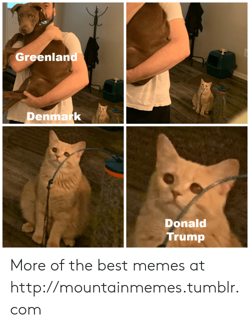 Donald Trump: Greenland  Denmark  Donald  Trump More of the best memes at http://mountainmemes.tumblr.com