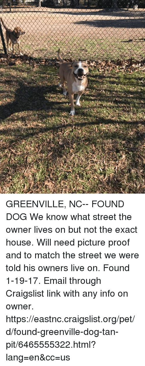 GREENVILLE NC-- FOUND DOG We Know What Street the Owner ...