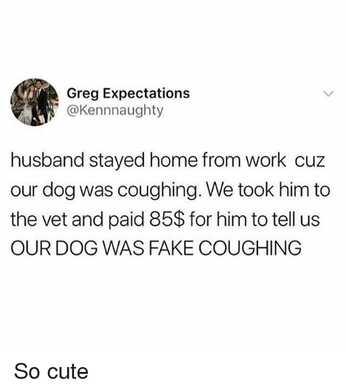 Cute, Fake, and Memes: Greg Expectations  ' @Kennnaughty  husband stayed home from work cuz  our dog was coughing. We took him to  the vet and paid 85$ for him to tell us  OUR DOG WAS FAKE COUGHING So cute