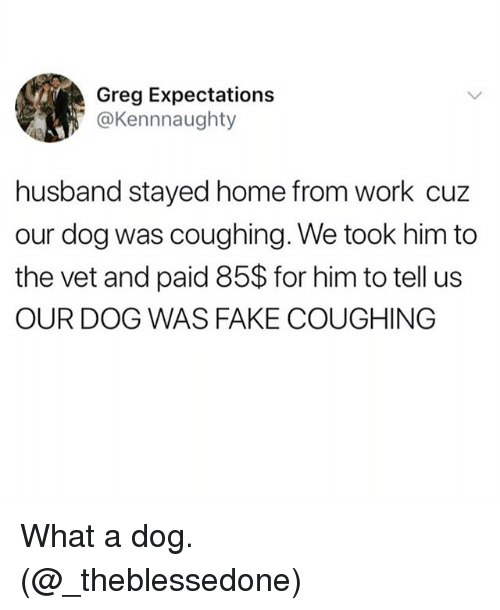 Fake, Memes, and Work: Greg Expectations  @Kennnaughty  husband stayed home from work cuz  our dog was coughing. We took him to  the vet and paid 85$ for him to tell us  OUR DOG WAS FAKE COUGHING What a dog. (@_theblessedone)
