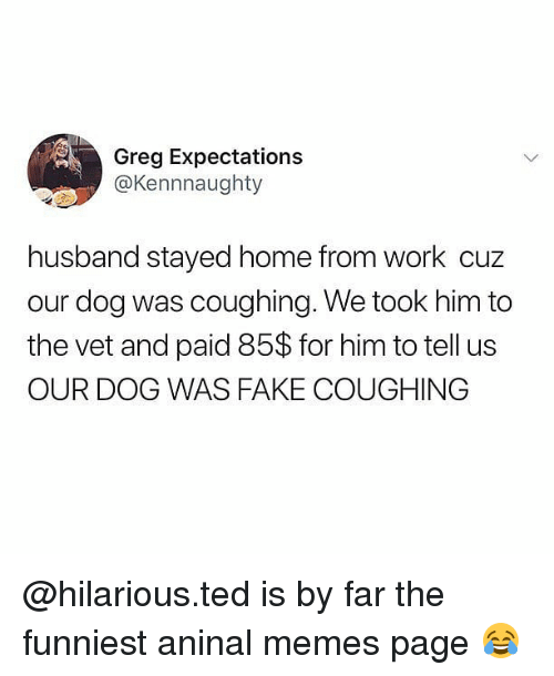 SIZZLE: Greg Expectations  @Kennnaughty  husband stayed home from work cuz  our dog was coughing. We took him to  the vet and paid 85$ for him to tell us  OUR DOG WAS FAKE COUGHING @hilarious.ted is by far the funniest aninal memes page ?