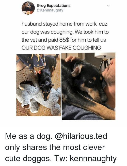 Cute, Fake, and Memes: Greg Expectations  @Kennnaughty  husband stayed home from work cuz  our dog was coughing. We took him to  the vet and paid 85$ for him to tell us  OUR DOG WAS FAKE COUGHING Me as a dog. @hilarious.ted only shares the most clever cute doggos. Tw: kennnaughty