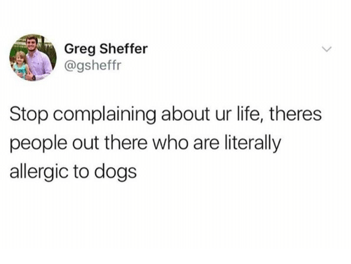 Dank, Dogs, and Life: Greg Sheffer  @gsheffr  Stop complaining about ur life, theres  people out there who are literally  allergic to dogs