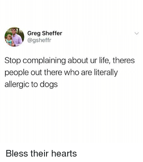 Dogs, Life, and Girl: Greg Sheffer  @gsheffr  Stop complaining about ur life, theres  people out there who are literally  allergic to dogs Bless their hearts