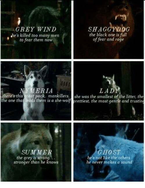 Memes, Summer, and Blacked: GREY WIND  SHAGGY OG  the black one is full  Ne's killed too many men  of fear and rage  to fear them now  LADY  MERIA  there's this great pack, mankillers. she was the smallest the litter, the  the one tha  leads them is a she-wolf prettiest, the most gentle and trusting  GHOST  SUMMER  he's not like the others  the grey is strong.  stronger than he knows  he never makes a sound